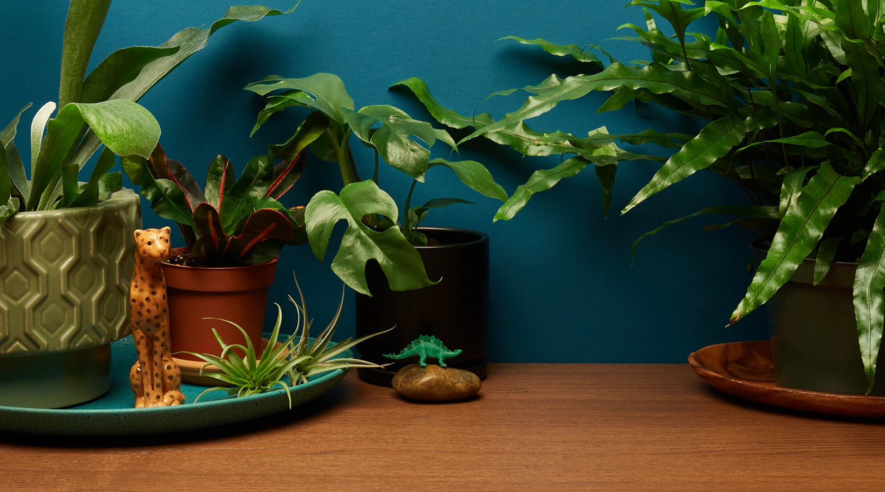 This Valentine's day give Houseplants instead of flowers.